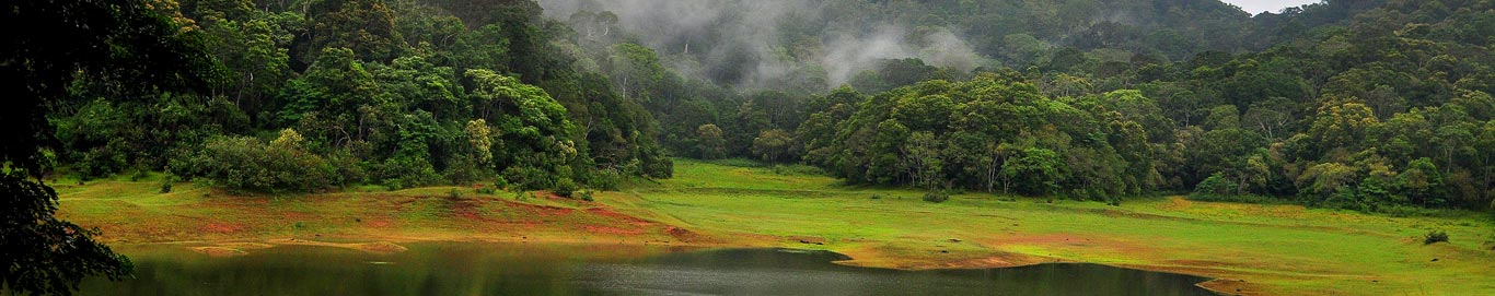 Honeymoon packages to thekkady